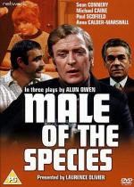 Male of the Species (TV)