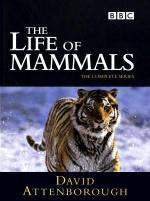 The Life of Mammals (TV Series)