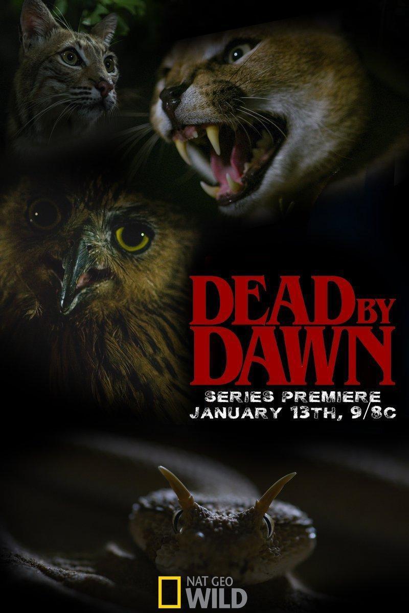 Dead by Dawn (TV Series) (2019) - Filmaffinity