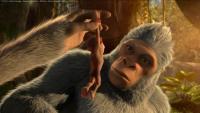 El reino de los monos  - Fotogramas