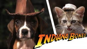 Indiana Bones and the Raiders of the Lost Bark (C)