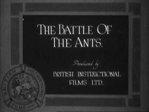 The Battle of the Ants (C)
