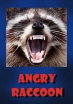 Angry Raccoon (C)