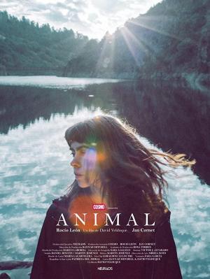 Animal (C)