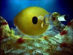 Bacardi Submarine (S)
