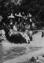 Baignade de chevaux (C)