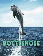 Bottlenose (C)