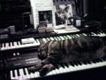 Chat écoutant la musique (C)