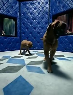 Control Machete y Ely Guerra: Amores perros (De perros amores) (Music Video)