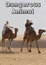 Dangerous Animal (C)