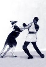 Das boxende Känguruh (C)
