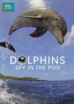 Dolphins: Spy in the Pod (Miniserie de TV)