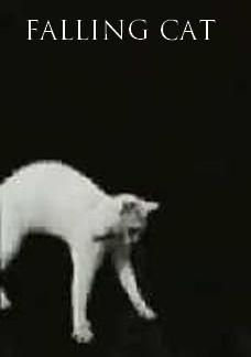 Falling Cat (C)