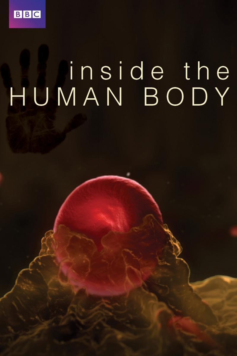 En el interior del cuerpo humano (Serie de TV) (2011) - FilmAffinity