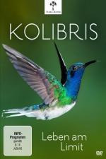 Los colibríes. Preciosos mensajeros