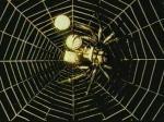 La araña de oro (C)