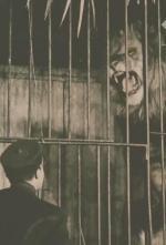 La maison des lions (C)