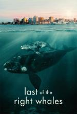Last of the Right Whales