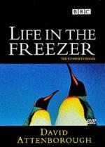 El planeta helado (La vida en la Antártida) (TV)