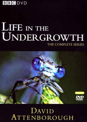 Vida en miniatura (TV)