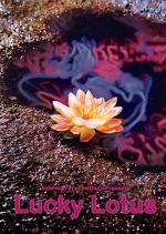 Lucky Lotus (C)
