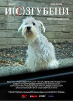 Mising dog (C)