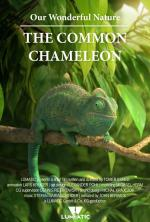 Our Wonderful Nature - The Common Chameleon (C)