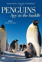 Penguins – Spy in the Huddle (Miniserie de TV)