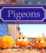 Pigeons (C)