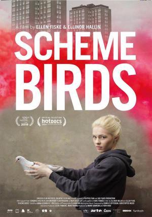 Scheme Birds