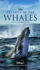 Secrets of the Whales (Miniserie de TV)