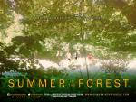 Summer in the Forest