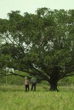 Talk to the Tree (TV)