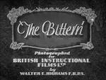 The Bittern (C)