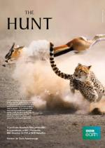 The Hunt (TV)