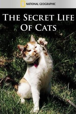 La vida secreta de los gatos (TV)