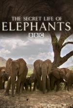 La vida secreta de los elefantes (Miniserie de TV)