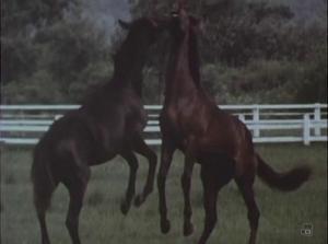 La canción del caballo (TV)