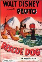 Rescue Dog (C)