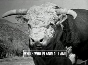 Who's Who in Animal Land (C)